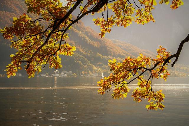 stromy, jezero