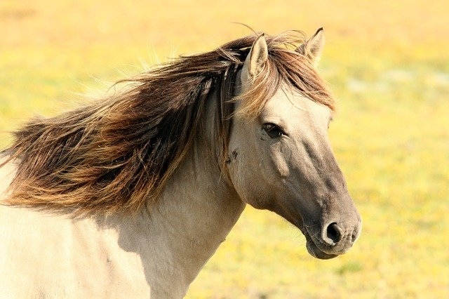 Kůň v běhu